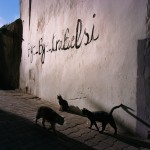 Tunisia, Tunis Cats walk by a wall inside the medina. Graffiti on the wall reads 'Bye bye Trabelsi'.