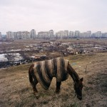 Romania, Bucharest. Horse grazing in a desolate landscape.